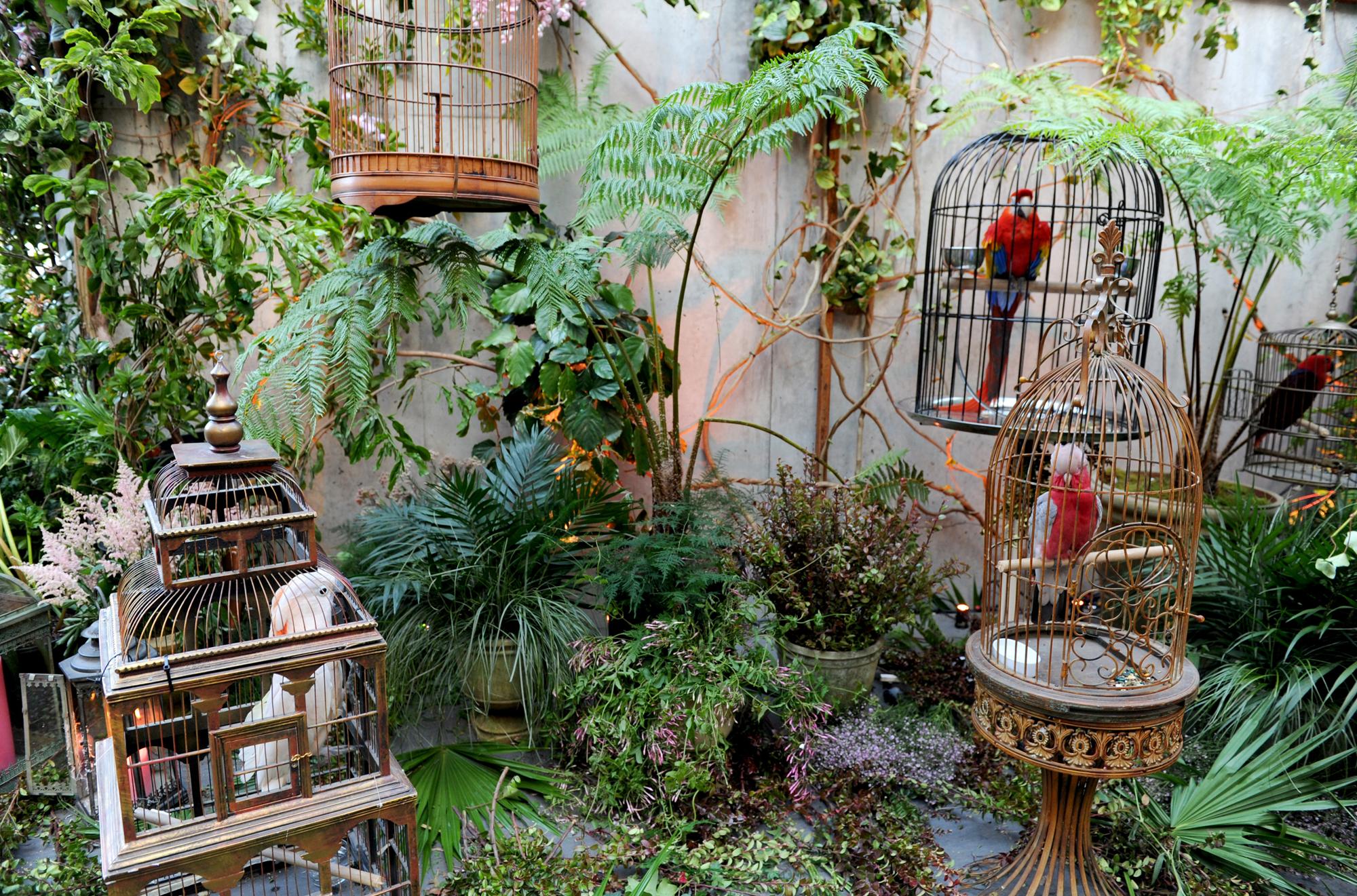 gucci birds